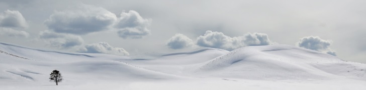 lonely-tree-in-the-snow
